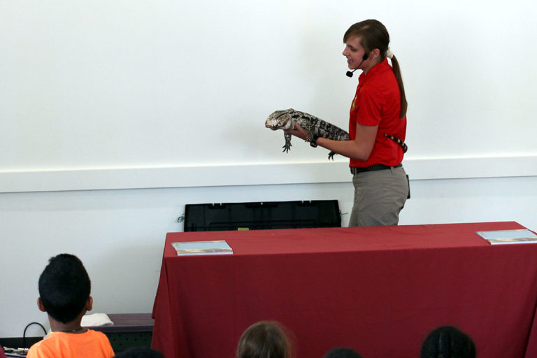 Reptiles, Books And Just Playing Around At The New Woodridge Library