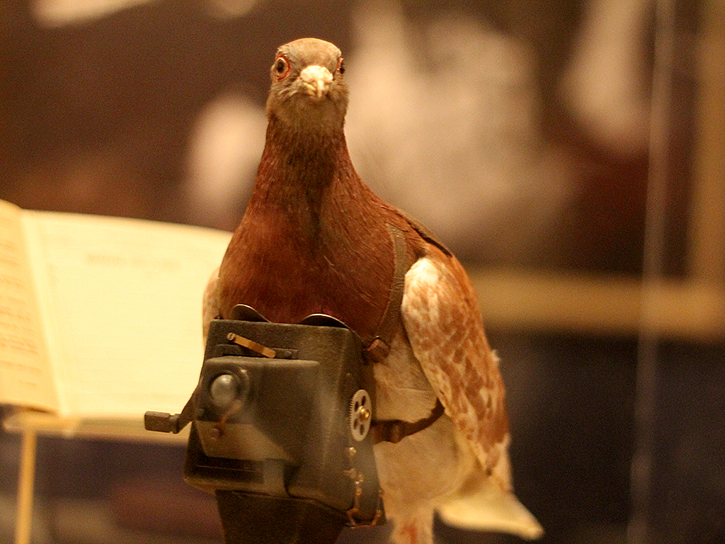 Pigeon with a camera